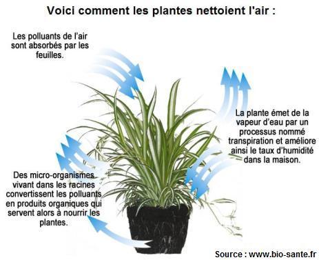 schema-comment-les-plantes-dépolluent.jpg